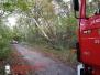 Hilfeleistung – – Mehrere Bäume drohen auf Gehweg zu fallen - Immenweg /Königsberg 30.10.2017
