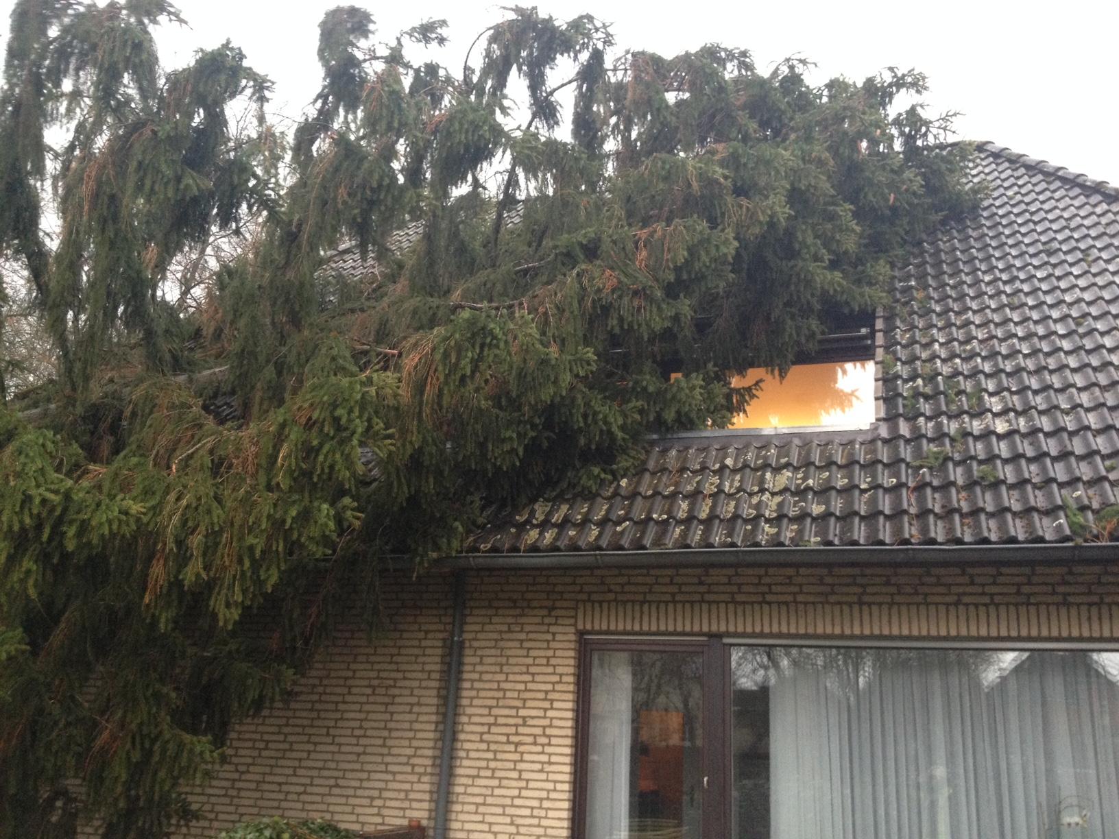 007. Sturmschaden - Baum auf Haus