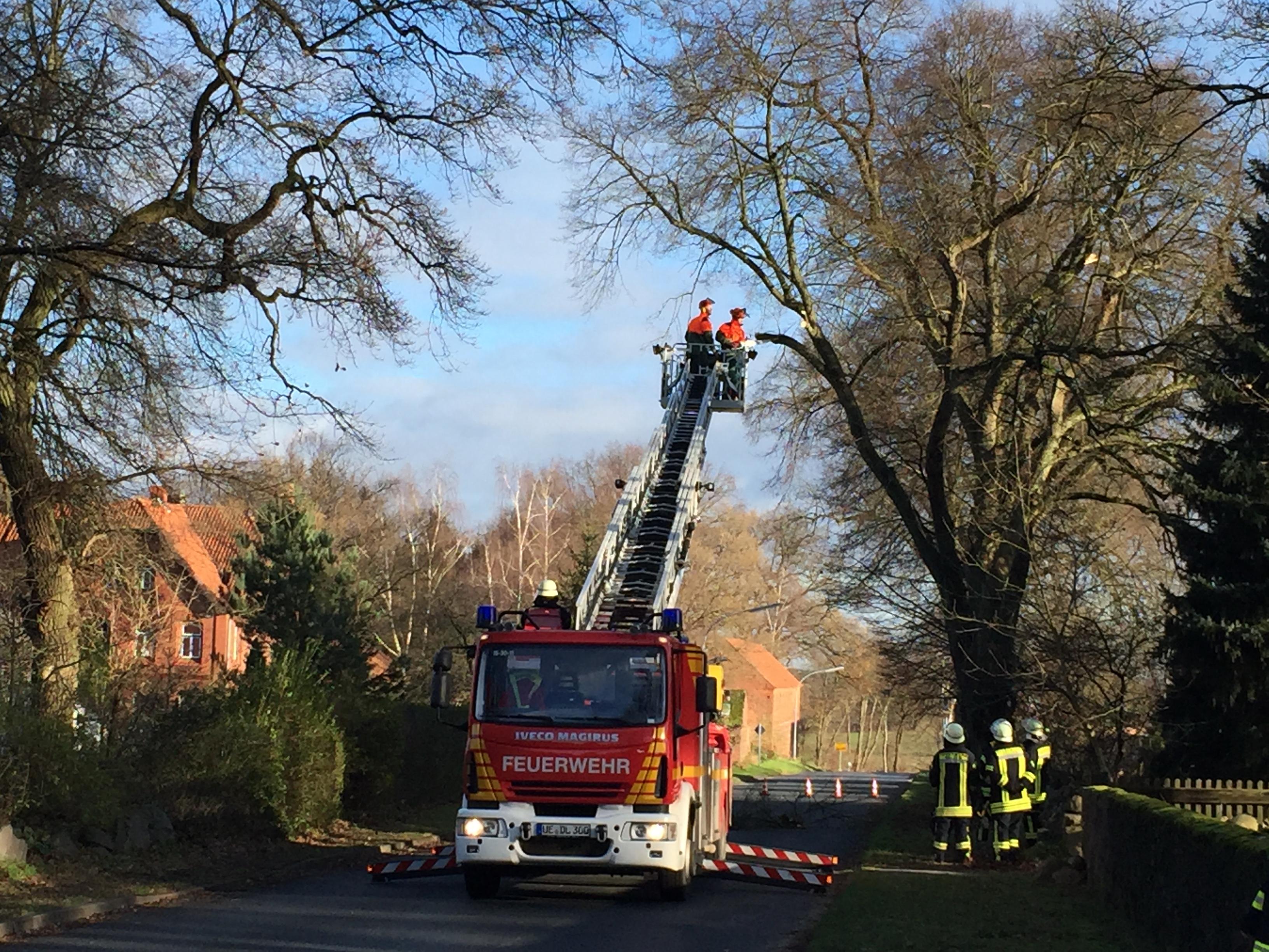 251. Anforderung DLK / Baum droht auf Straße zu fallen