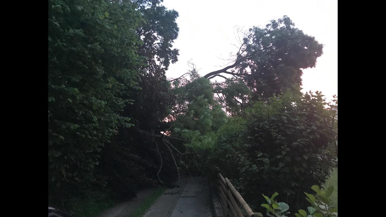 131. Baum droht auf Garage zu fallen