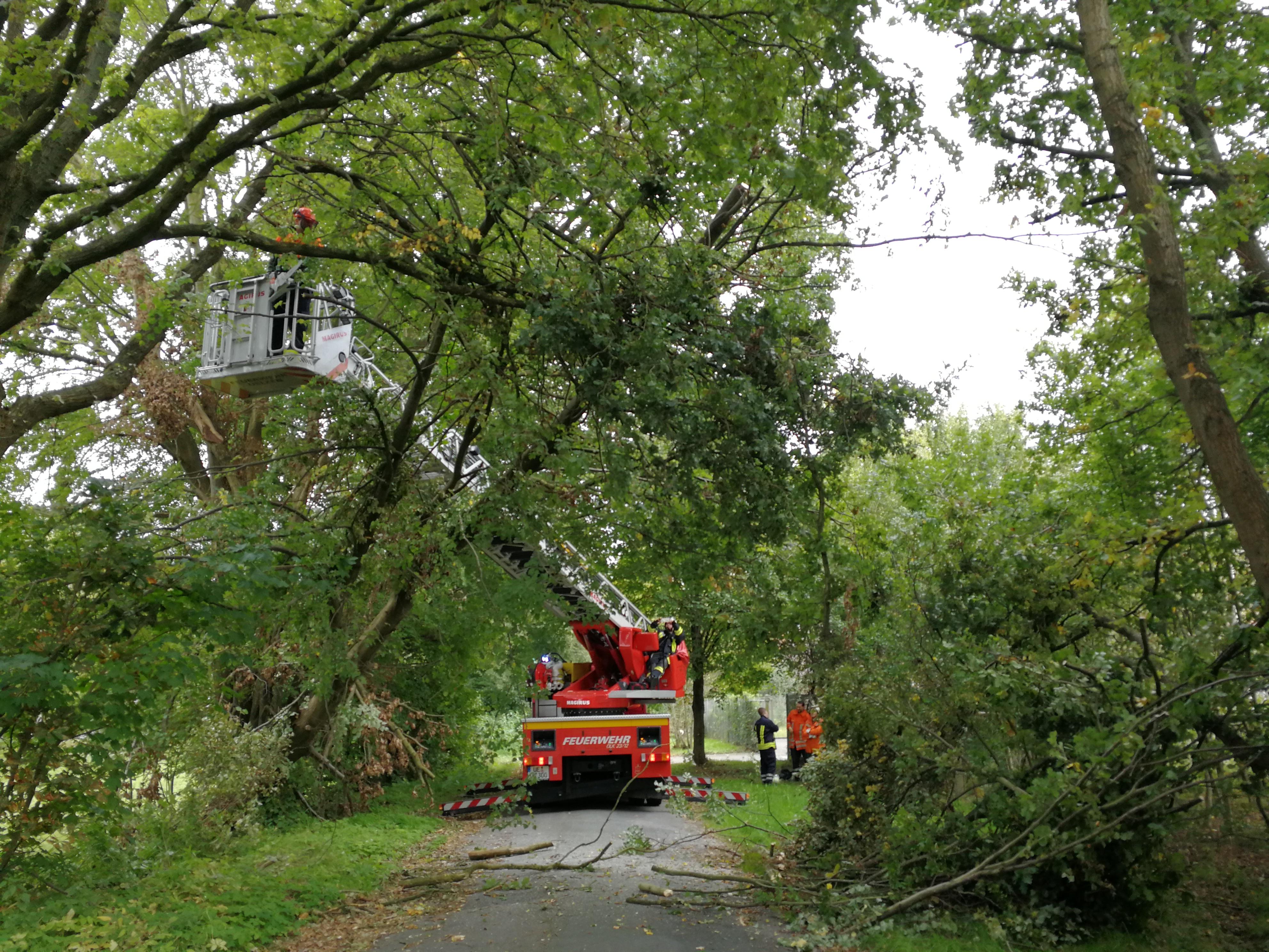 257. Hilfeleistung - - Anforderung DLK -  Baum droht auf Straße zu fallen