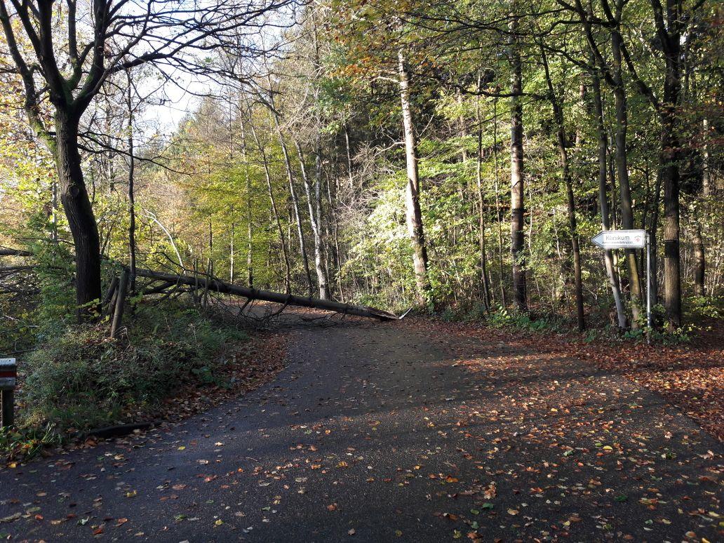 291. Hilfeleistung -- Baum auf Straße