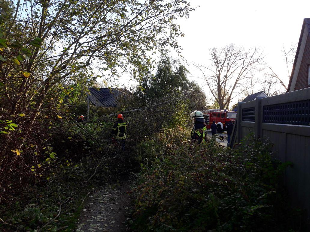 292. Hilfeleistung -- Baum auf Gehweg