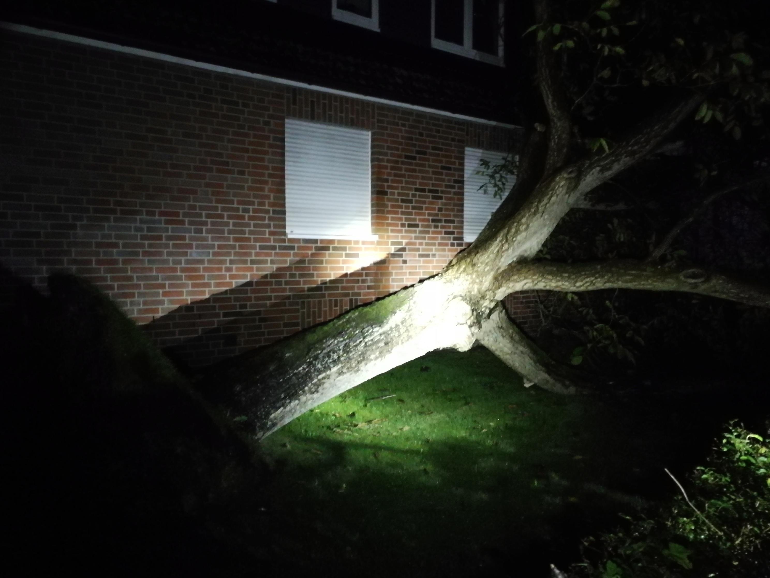 277. Hilfeleistung -- Baum auf Gehweg