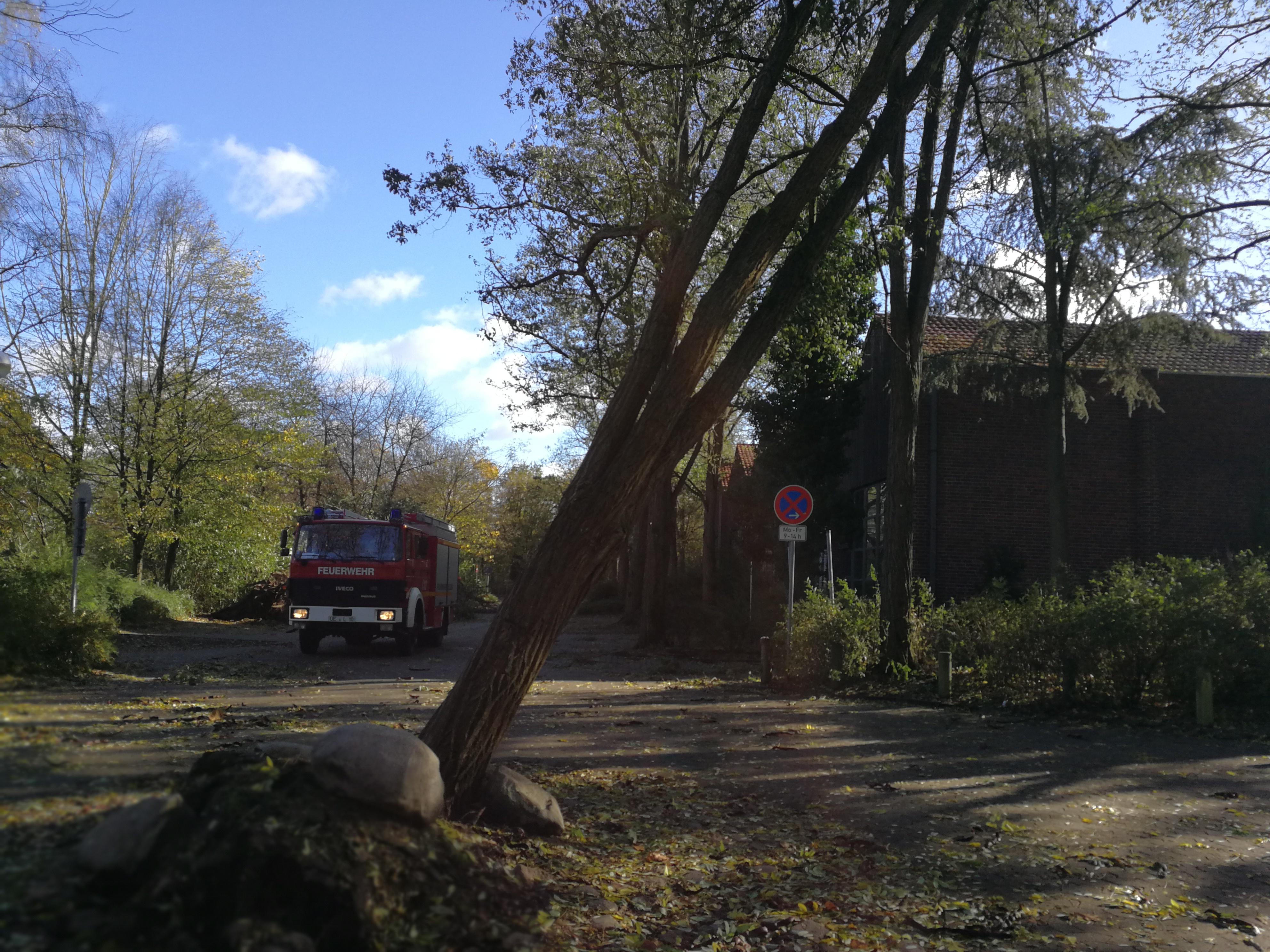 296. Hilfeleistung - - Baum droht auf Straße zu fallen