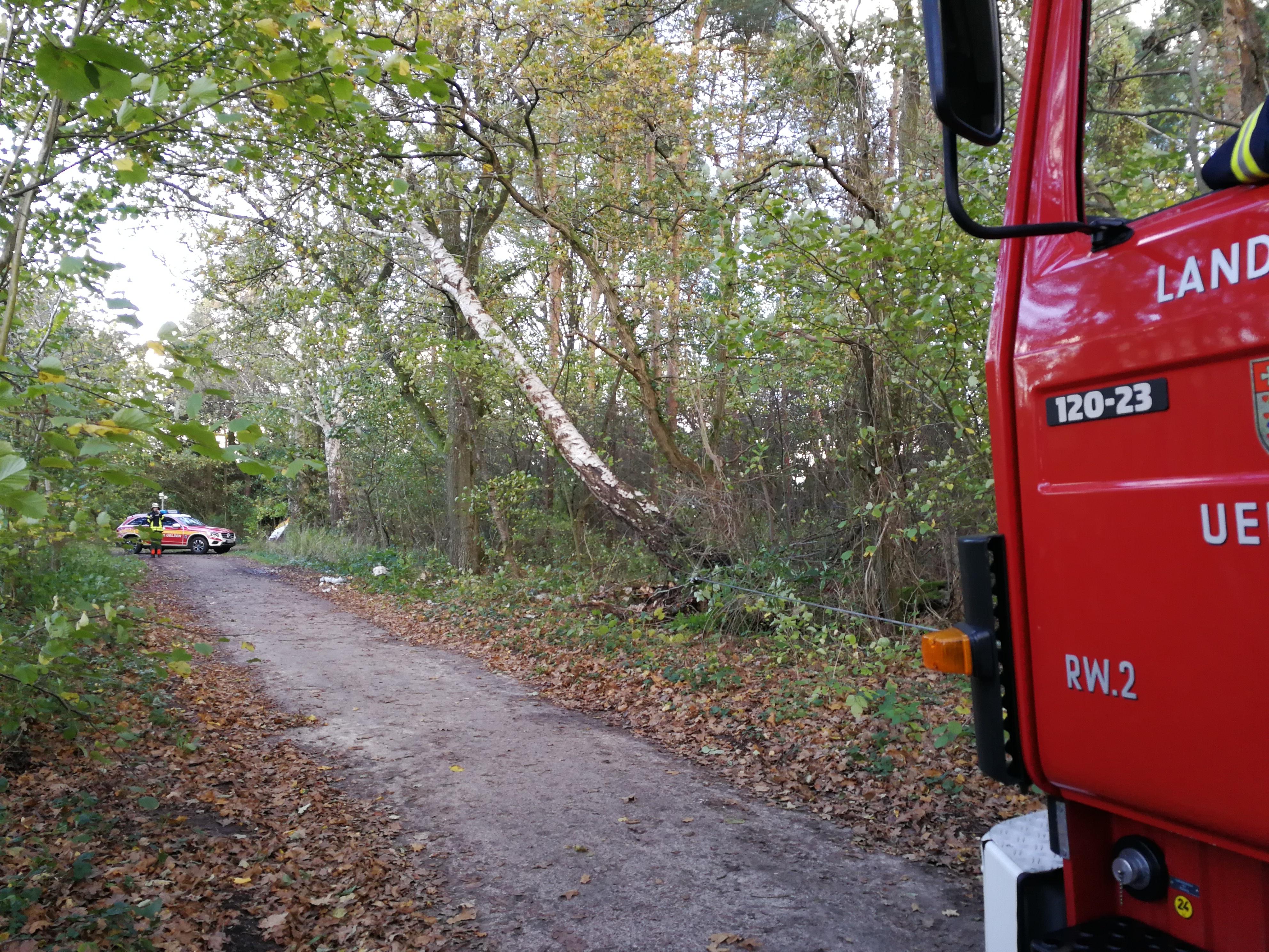 301. Hilfeleistung - - Mehrere Bäume drohen auf Gehweg zu fallen