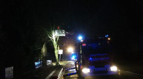 305. Hilfeleistung - - Baum droht auf Straße zu fallen