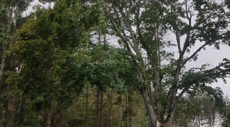 216. Hilfeleistung - - Anforderung DLK - Baum droht auf Straße zu fallen