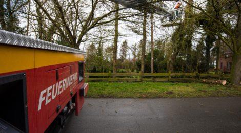 031. Hilfeleistung - - Anforderung DLK - Baum droht auf Straße zu fallen
