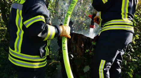 075. F1 - Brennt Baumstumpf