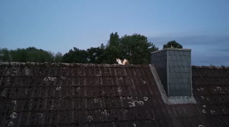 106. Hilfeleistung - - Tierrettung - Katze auf Dach